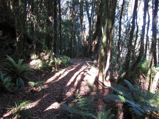 Eastern Taranaki Experience: Better section of track, other sections were muddy