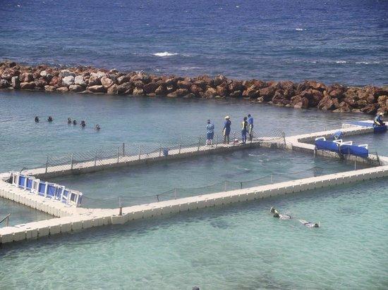 Hotel Riu Montego Bay : dolpin cove