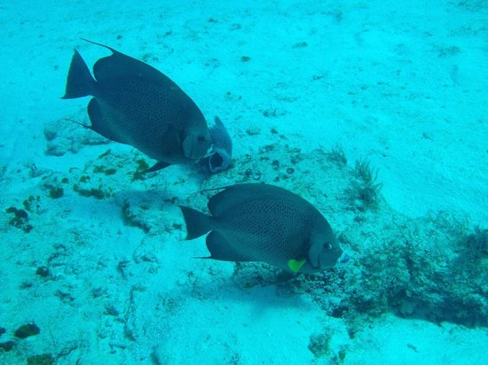 Sunrise Divers: Fish off Chankanaab