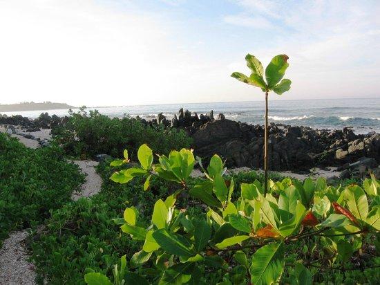 Merece Tus Suenos: Broken seashell pathway heading south of the property