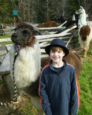 Smoky Mountain Llama Treks - Day Tours : Peanut and Ethan