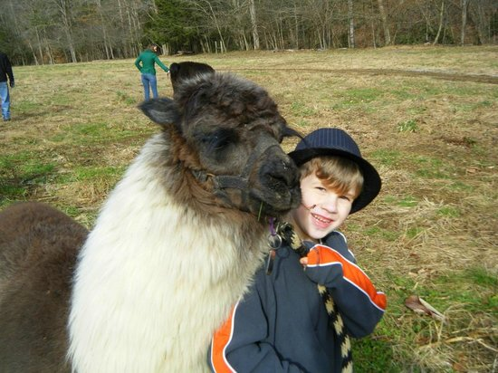 Smoky Mountain Llama Treks - Day Tours : Ethan and Peanut