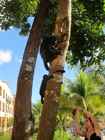 Sandos Playacar Beach Resort: Monkeys by the 1000 building