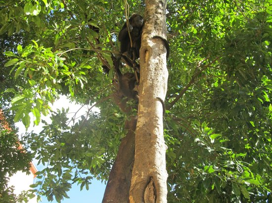 Sandos Playacar Beach Resort: More monkeys