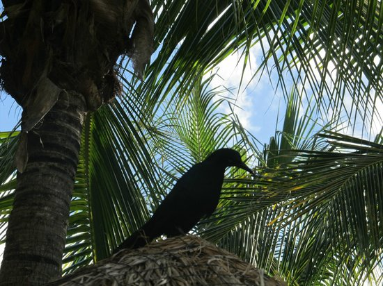 Sandos Playacar Beach Resort: Birds