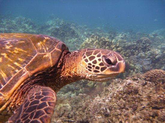 Honolua Bay: Honu 3