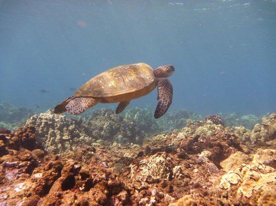 Honolua Bay: Honu 2