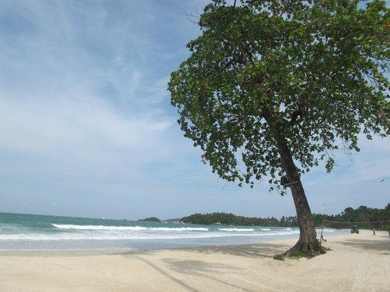Angsana Bintan: Tree