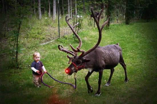 Agate Inn, Inc.: Walking the reindeer at the Agate Inn