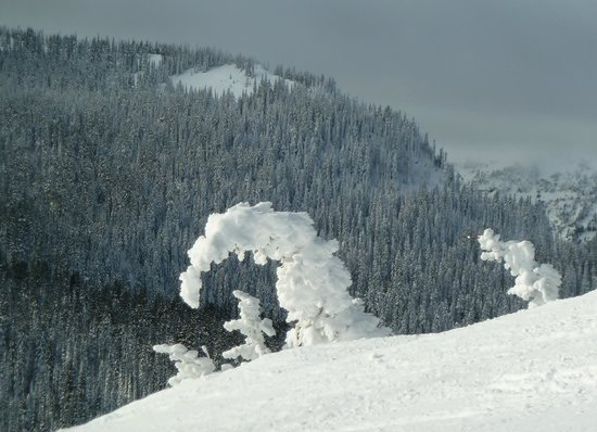 White Pass Ski Area: Snow ghosts: trees so encased in snow they sometimes assume strange shapes