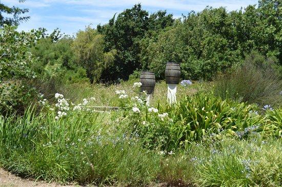 Backsberg: beautiful greenery