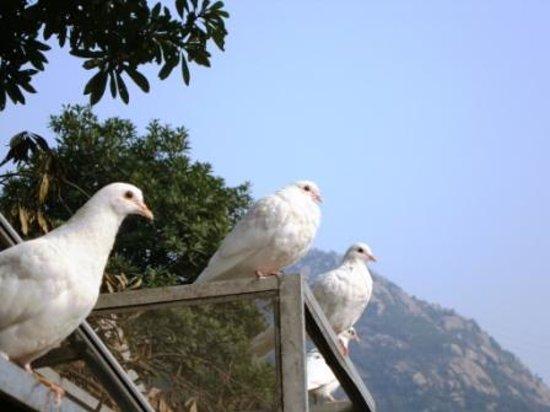 Yaoxi Scenic Resort of Wenzhou : Yaoxi birds