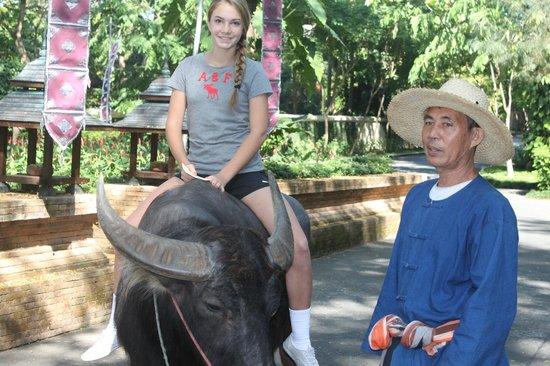 Four Seasons Resort Chiang Mai: Grounds 