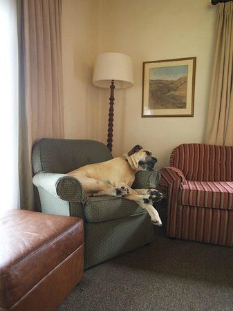 Cavern Drakensberg Resort & Spa : The Cavern :no dogs or children in the reading room!