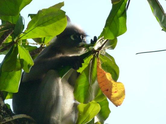 Rayavadee Resort: Petit singe timide