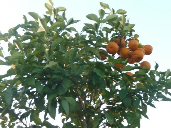 Club Dar Atlas: oranger