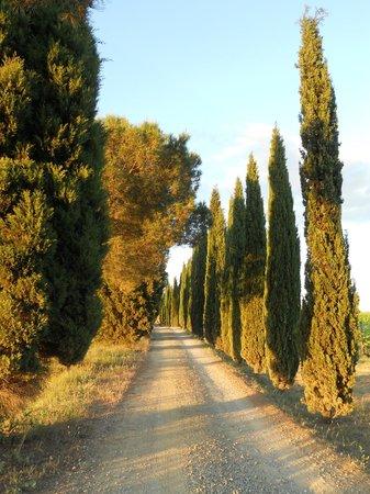 Tenuta San Vito: la strada che porta alle camere