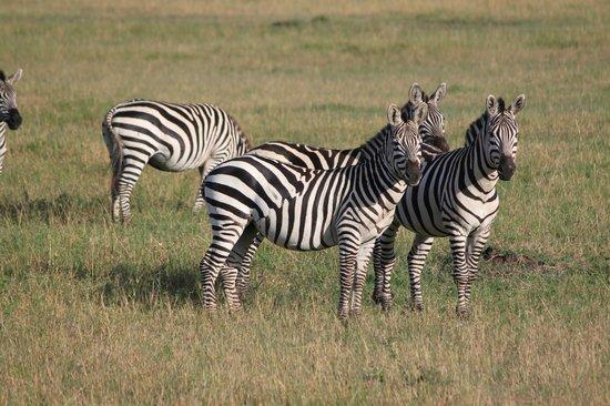 Entim Camp: Zebra