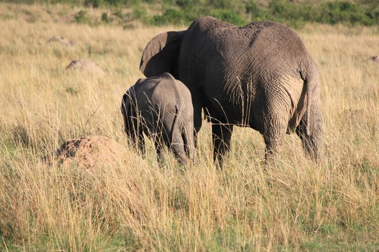 Entim Camp: Mama and baby elephant