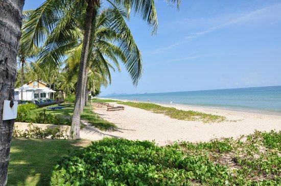 โรงแรมณิชาวิลล์ รีสอร์ท: Beach right in front of our house