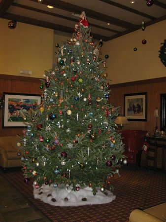 The Lodge at Gainesville: Lovely tree in lobby