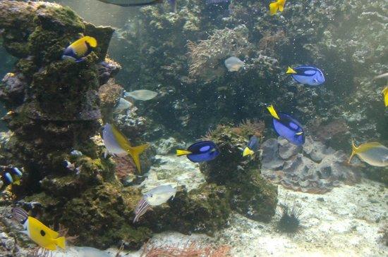 Deutsches Meeresmuseum: Bunte Fische