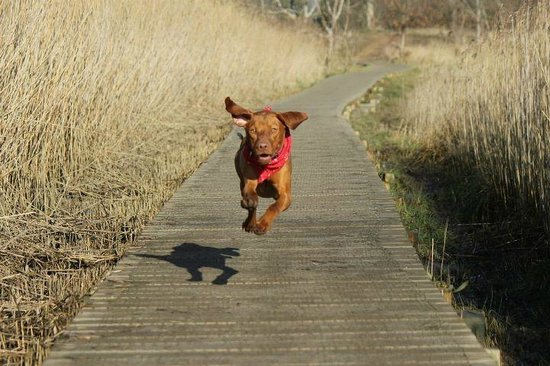 Dogs love the walks here at Iken Barns