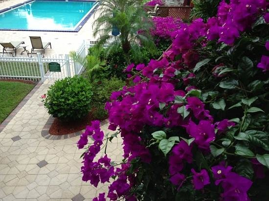 Ramada Naples: flowers and hotel pool