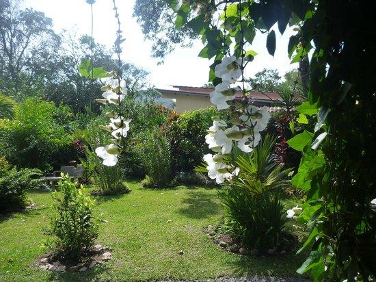 Casa Mariposa: vue de la tonnelle où on prends le petit-dejeuner