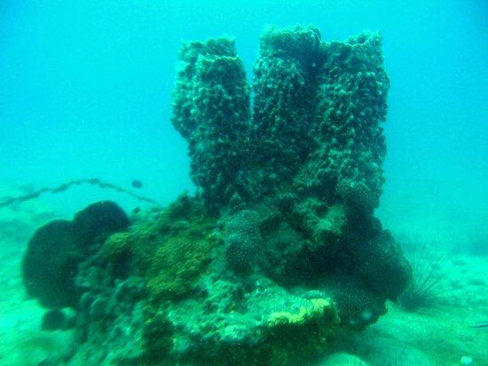 Scuba Zone: coral