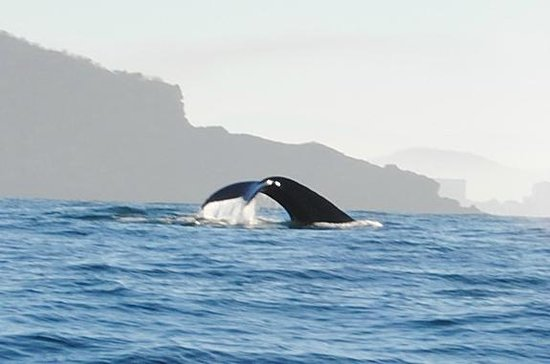 Onca Explorations: First whale we saw!