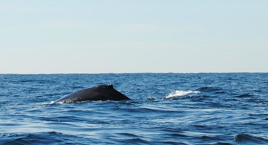 Onca Explorations: Second pair of whales...