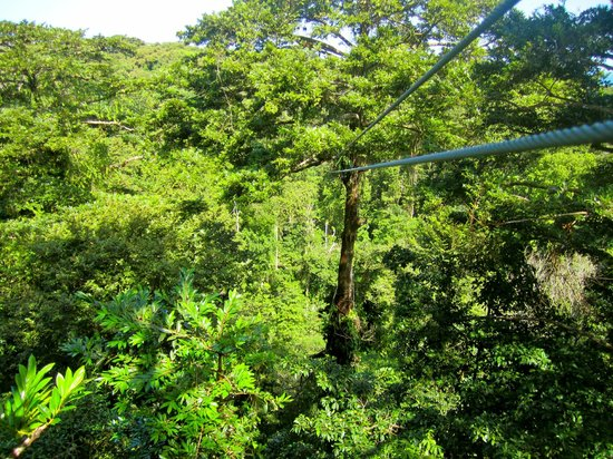 Sky Zipline Canopy Tour at Red Frog Beach:                   great view
