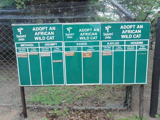Emdoneni Lodge - Adopt A Cat