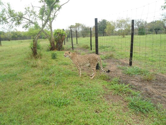 เอมโดเนนีลอดจ์: Emdoneni Lodge - Lots of room for the Cheetahs to roam!