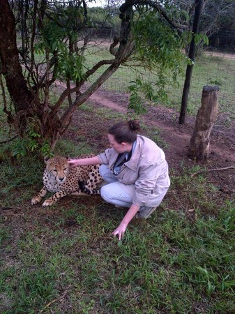 Emdoneni Lodge: Emdoneni Cat Rehabilitation Centre - Up close and personal. :)