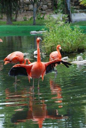 Grand Palladium Colonial Resort & Spa: The flamingo pond
