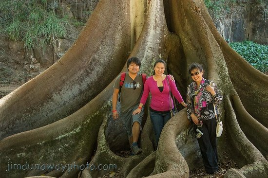 Prince Kuhio Condos: Allerton Gardens: Moreton Bay Fig with Tourists