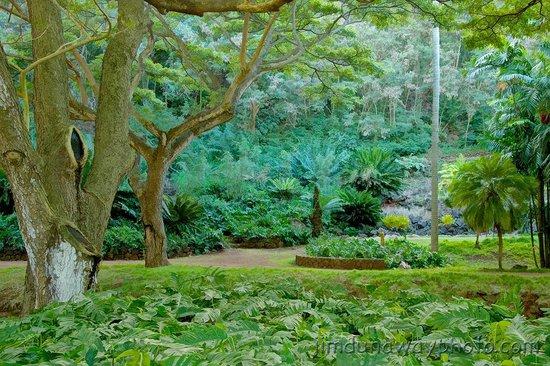 Prince Kuhio Condos: Allerton Gardens: Typical Scene