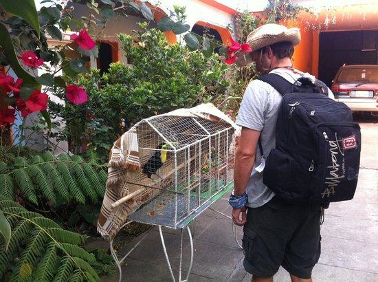 Hotel El Jardin de Lolita: Birds and a little garden