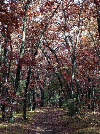 Crockett's Resort Camping: trails 