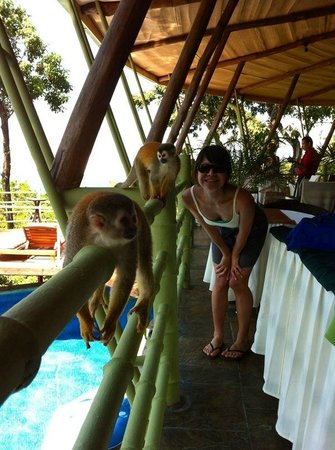 Issimo Suites Boutique Hotel and Spa: monkeys!