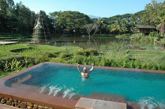 Four Seasons Resort Chiang Mai: infinity pool and rice fields beyond