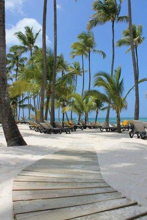 Barcelo Bavaro Beach - Adults Only : Beautiful Beach