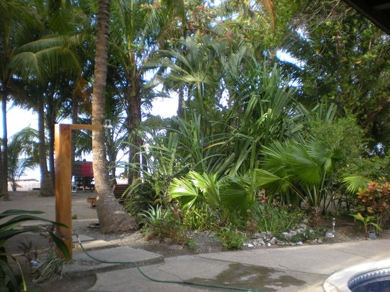 Fenix Hotel - On The Beach: Great vegetation on the grounds