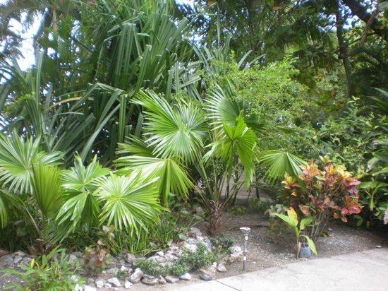 Fenix Hotel - On The Beach: Lush vegetation, beautiful landscaping and care