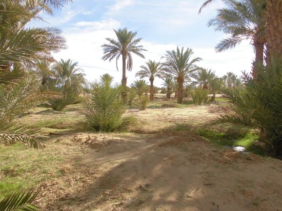 Kasbah Azalay Merzouga: Pic2