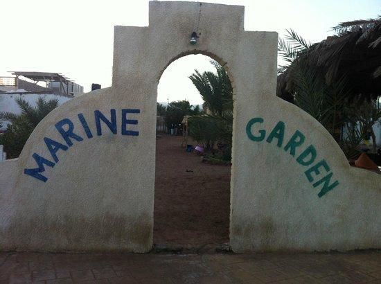 Marine Garden Camp: <3