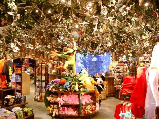 Rainforest Cafe Arizona Mills