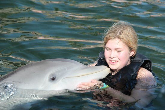 Dolphins Plus - Key Largo: cuddle time